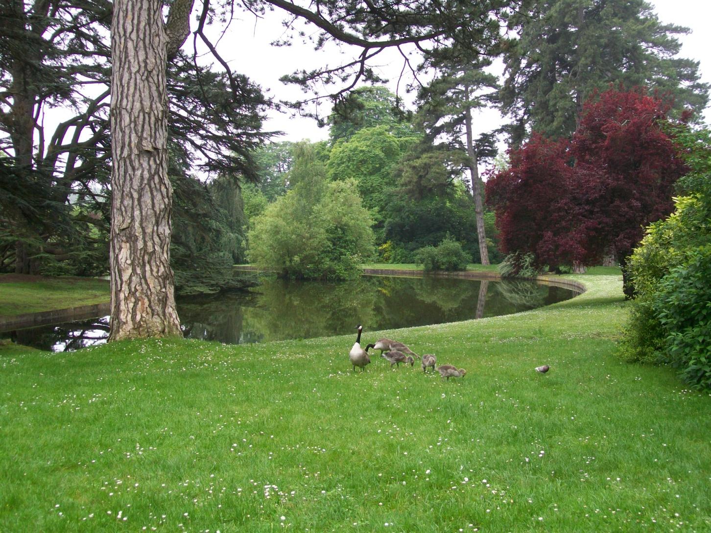 Le parc de Saint-Cloud